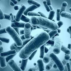 химчистка ковров и мягкой мебели - бактерии