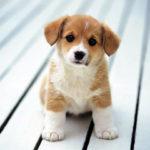 химчистка ковров и мягкой мебели - шерсть животных